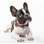 Poof Bean Evcil Hayvan İçin Akıllı Aktivite İzleyici (Mavi)