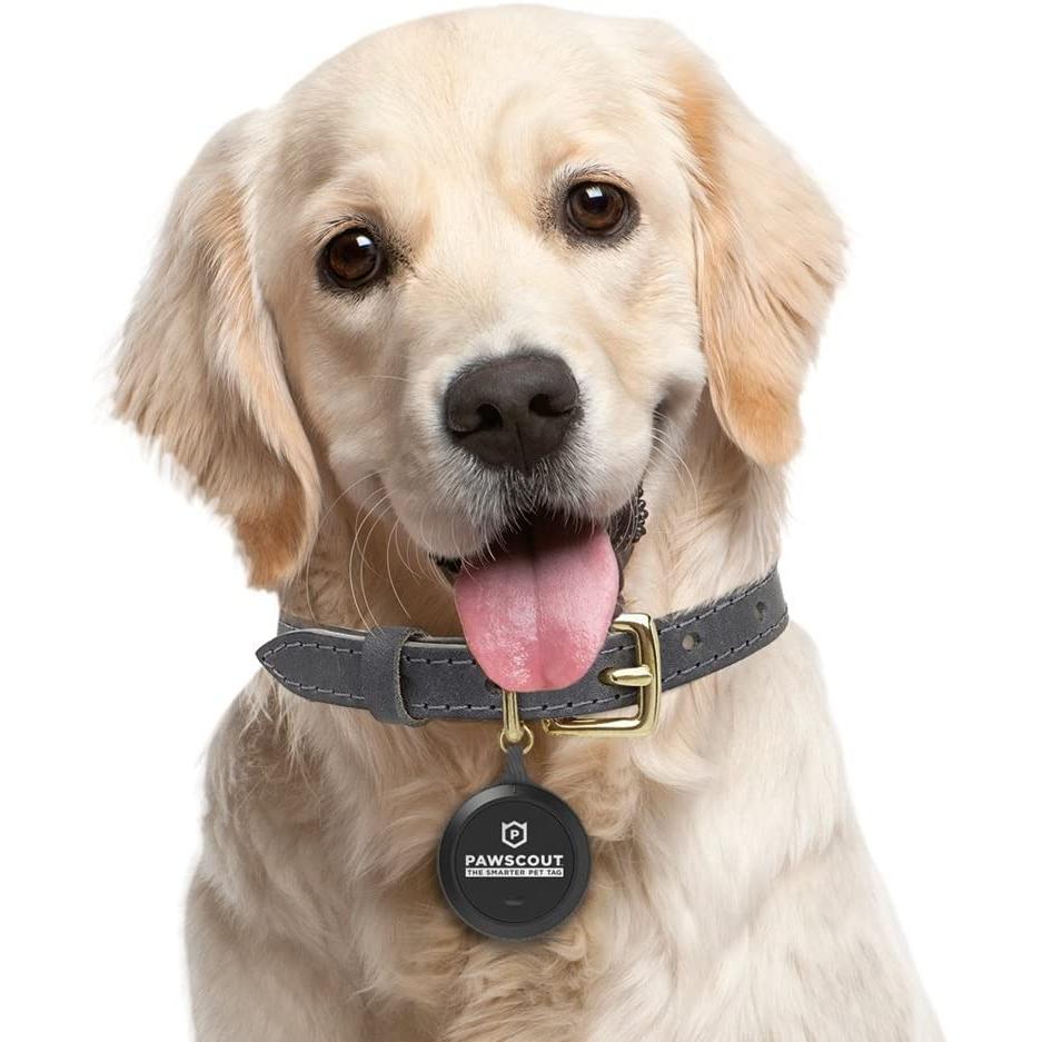 Pawscout Akıllı Evcil Hayvan Takip Cihazı (2. Nesil)
